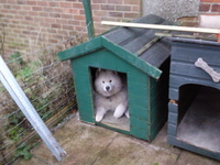 old kennel
