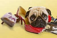 dog chews shoes!!!!
